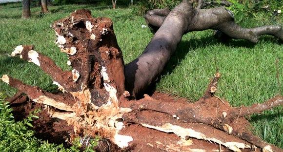 Mau tempo faz estragos no Vale do Sorraia. Árvore cai em cima de viatura no Furadouro