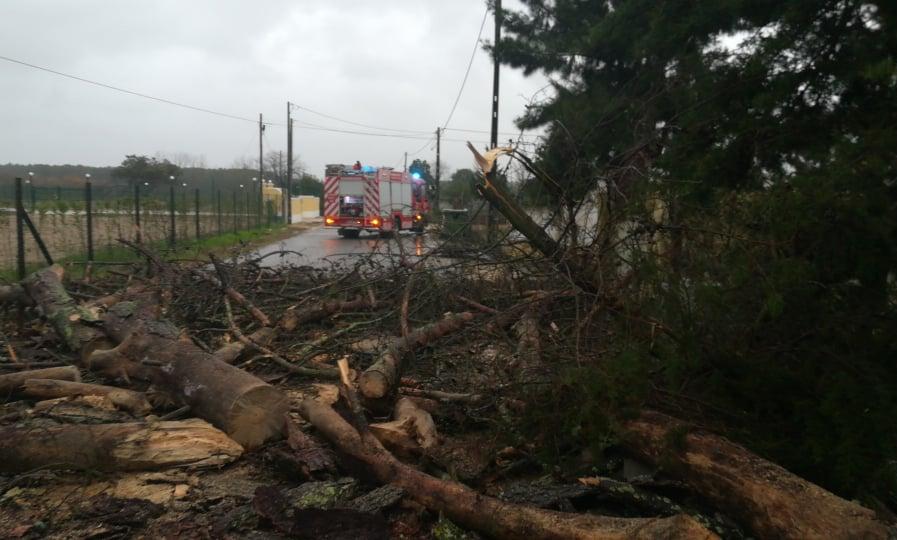 Queda de árvores cortou estrada entre Foros de Salvaterra e Salvaterra