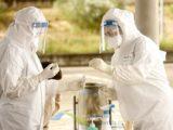 Pandemia abranda e estabiliza no Vale do Sorraia de acordo com dados da DGS