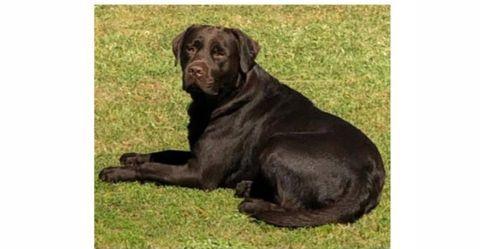 Família procura cão desaparecido em Santo Estevão