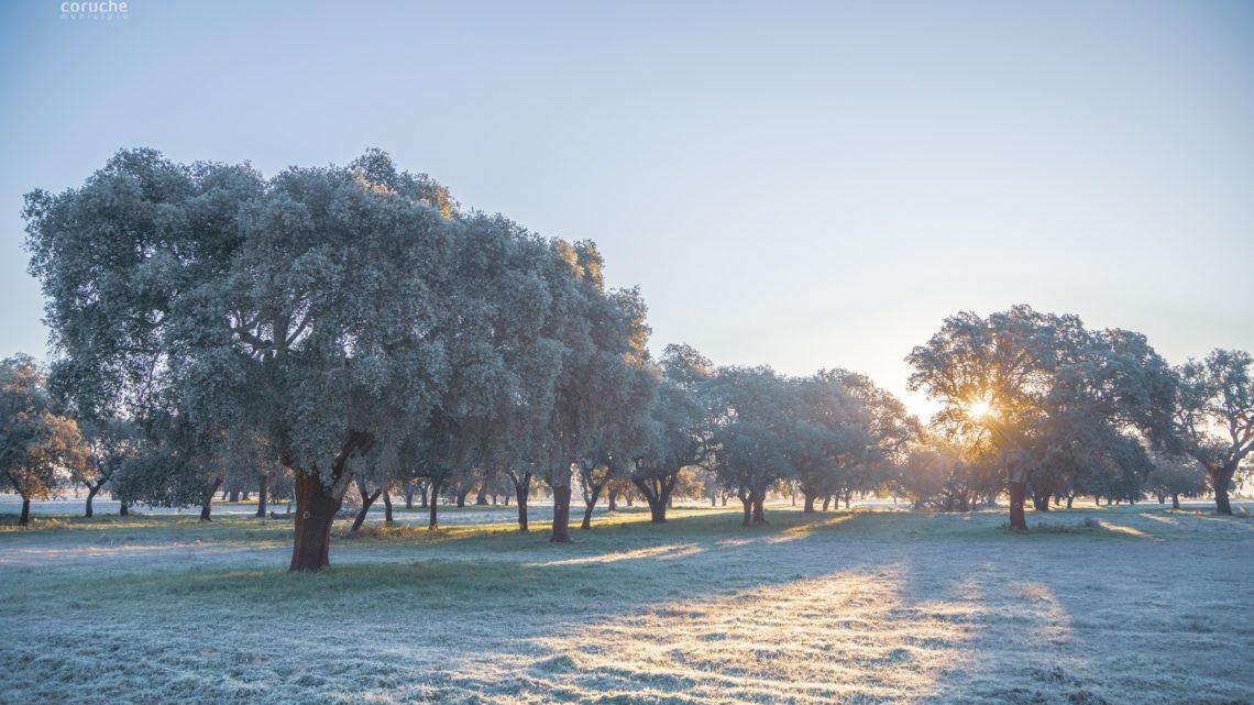Temperatura em Coruche entre as 10 mais baixas do ano