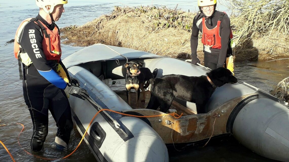 Dois cães resgatados da cheia do rio Sorraia pelos nadadores salvadores da Búzios